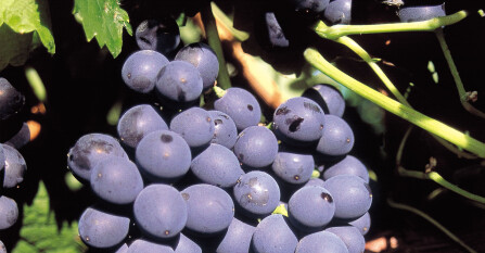 Margemaker: wijnen uit Oost-Europa